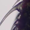 Под микроскопом: крапива, яблоневый цвет и плесень, жгучий волосок крапивы