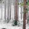 """Диктанты на тему """"Зима"""" для 3 класса"""