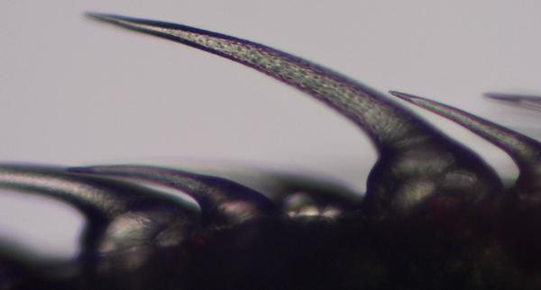 микроскопия
