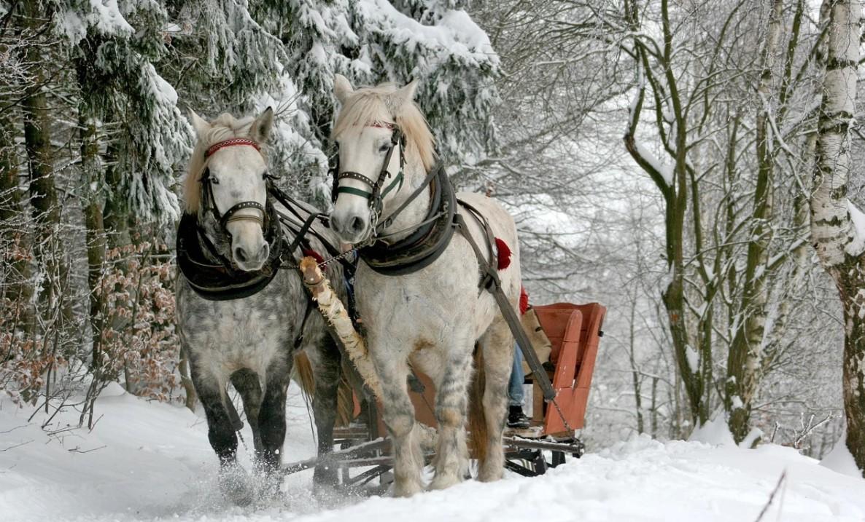 диктанты на тему зима для 4 класса